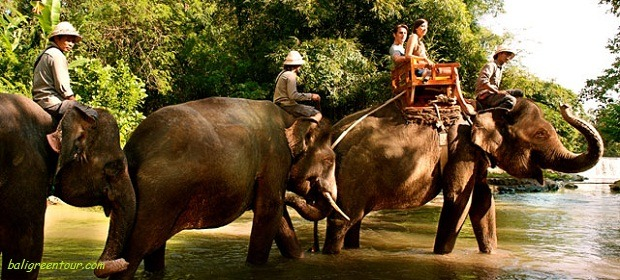 Bali Zoo Elephant Ride Tour - Elephant Back Safari Ride at Bali Zoo park
