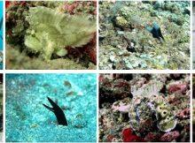 Padang Bai Diving Tour, Bali Diving Tour Packages, Bali Marine Activities, Bali Green Tour